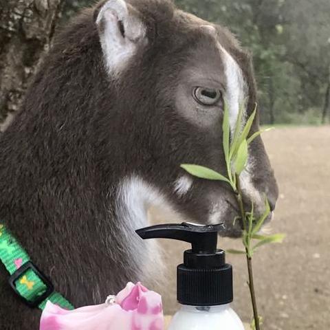 Touchwood Farm Goat Dairy